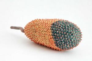 Melon de plein été/真夏瓜